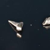 wklad-korzeniowo-koronowy-zlotol-2